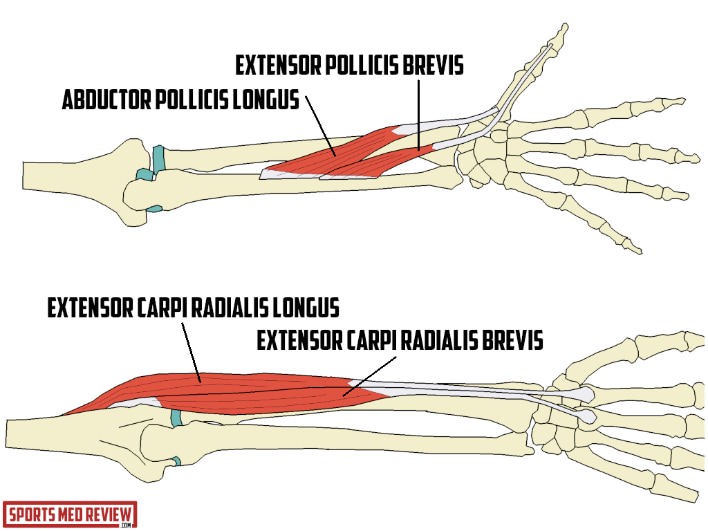 Tendons associated with thumb and wrist pain